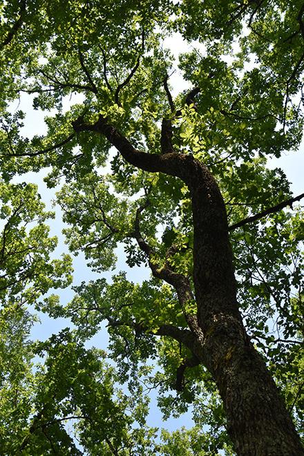Association Coeur de Forêt