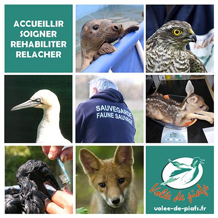 Centre de sauvegarde de la faune sauvage - Volée de piafs